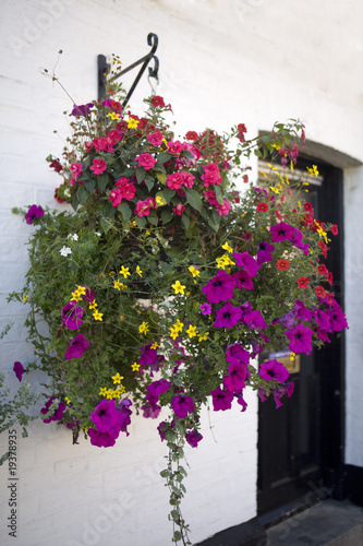 plant pots with petunia on the wall of the English home