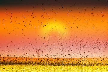 Bird Land Sunset Fine Art Photography Print