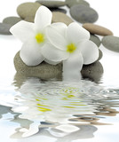décor zen frangipanier galets reflets
