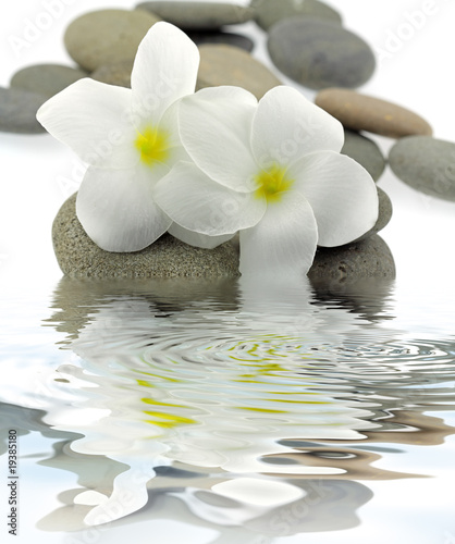 décor zen frangipanier galets reflets - 19385180
