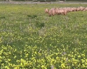 Le pecore tornano all'ovile - Parte II