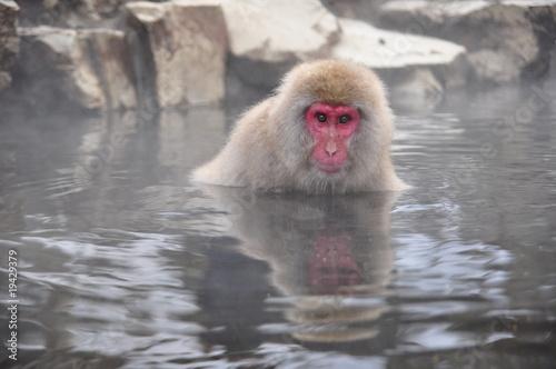 Foto op Canvas Aap snow monkey nagano Japan