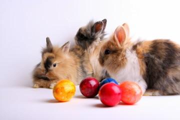 Drei Osterhasen mit Eiern