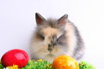 Osterhasen mit Eier