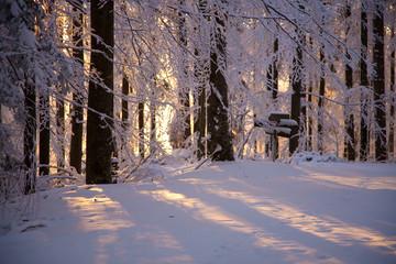 Sonne im schneebedeckten Wald