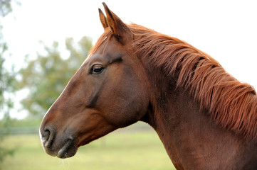 Pferde 96