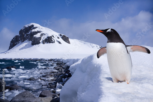 Poster Pinguin Penguin at the end of earth in Antarctica