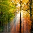 Fototapeten,herbst,landschaft,wald,natur