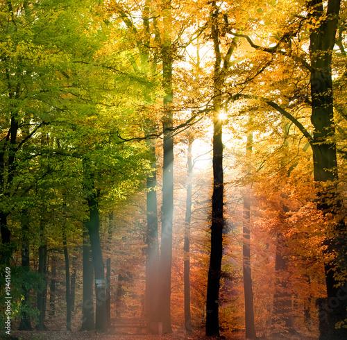 Leinwandbilder,herbst,landschaft,wald,natur