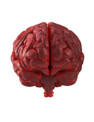 Human brain isolated front view