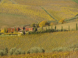 tuscan farmhouse surrounded by vineyards,Chianti, Italy poster