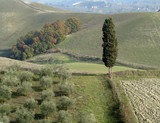 beautiful tuscan countryside, Italy poster