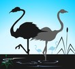 Illustration of two cranes in water