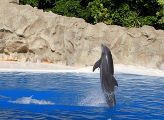 Delfín mular.
