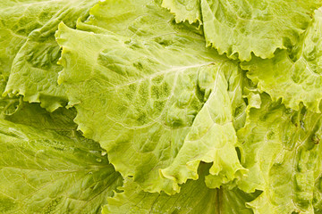 Green salad leaves background