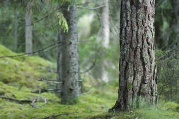 Bäume Moos Wald