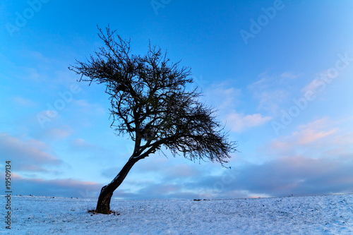 Wintertree VI