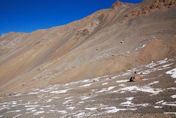 Nepalese desert