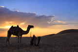 Camels in the Desert-