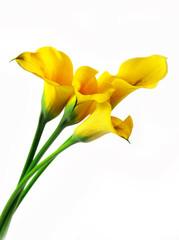 Yellow callas bouquet