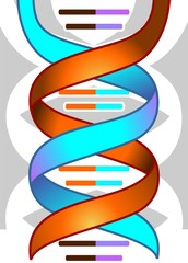 Illustration of colour of DNA model