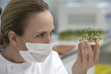 Scientist examining sprouts in petri dish