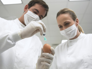 Scientists injecting syringe into egg