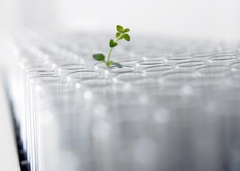 Seedling growing in test tube