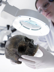 Scientist examining skull under magnification lamp