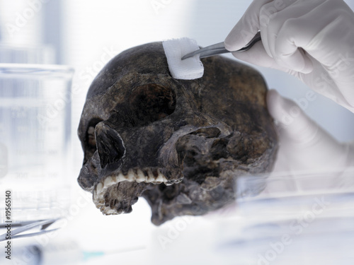 Scientist swabbing skull