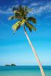 Coconut palm against blue sky