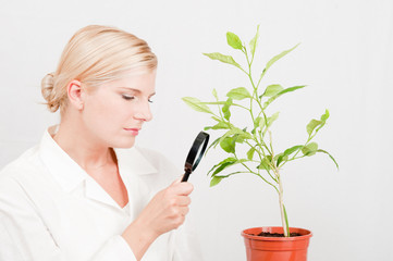 Young  female scientist of botany with green plant