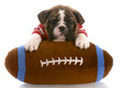 bulldog puppy wearing red jersey laying on stuffed football