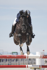 Horse and rider clearing an obstacle at a show jumping