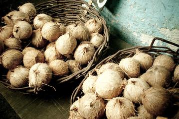 Coconuts in bahia
