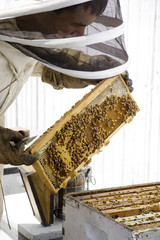 Beekeeper with Hive Frame
