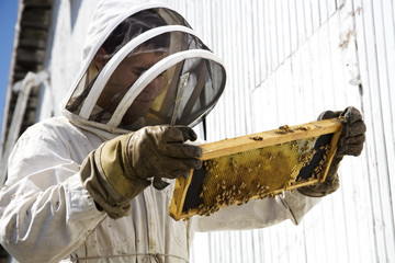 Beekeeper Looking at Hive