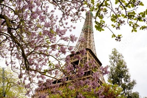 Floraison au pied de la tour Eiffel