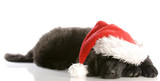 newfoundland puppy wearing santa hat - twelve weeks old poster