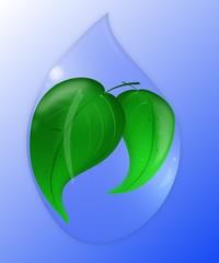 leaves inside of water drop