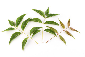 Neem leaves on white