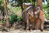 Slon čeká na turisty