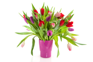Colorful tulips in purple vase