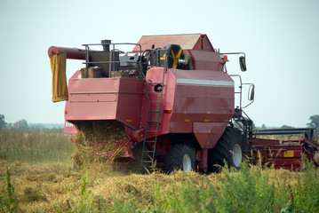 Red grain harvester combine in a field