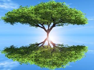 arbre et son reflet