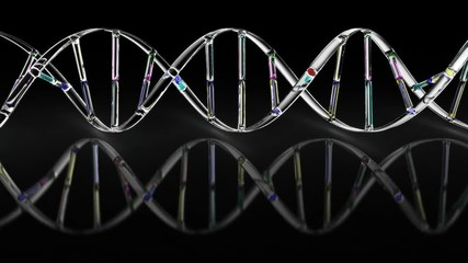 DNA - loop