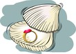 Illustration of golden ring with sea    shell