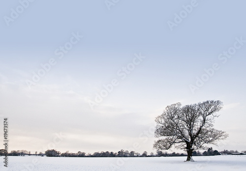 Oak tree in a field of snow