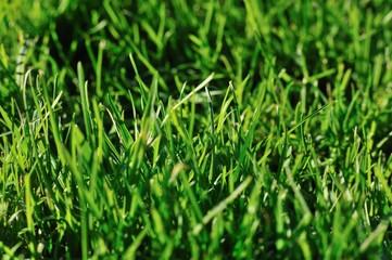 brin d'herbe