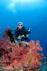 Plongeuse et photo sous marine, Mer Rouge, Egypte
